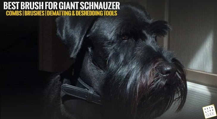 best brush for giant schnauzer