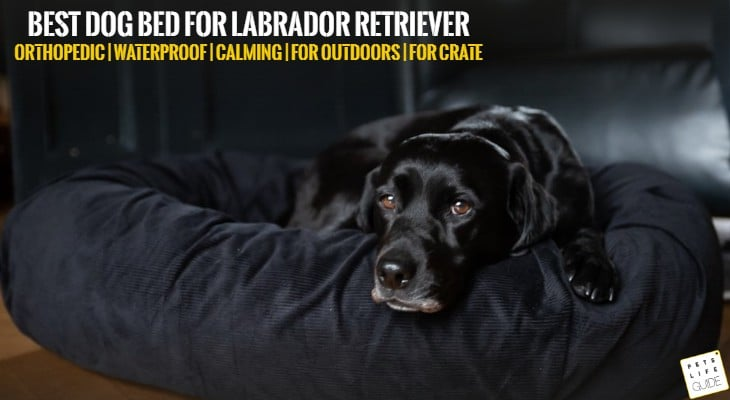 best dog bed for labrador