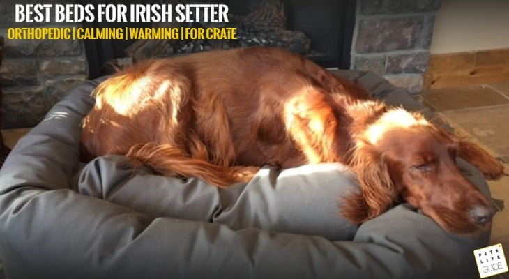 Best Dog Bed for Irish Setter