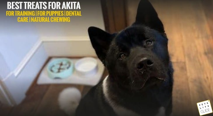 Best Treats for Akita