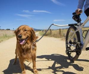 Sherpa Cycleash - Dog Bike Leash review