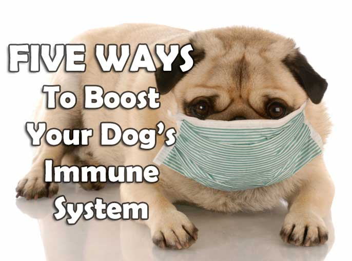 How To Boost Dog S Immune System