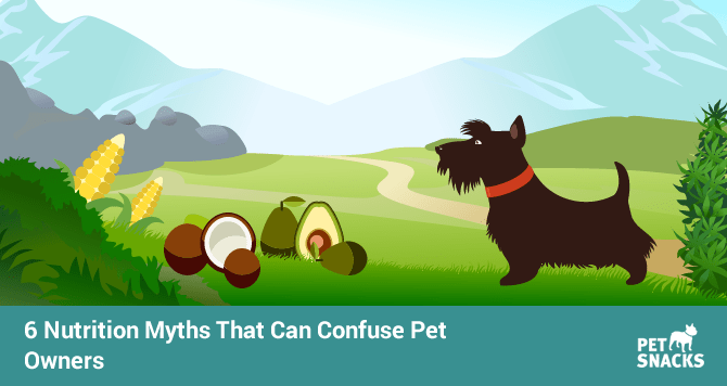 preview-full-6-nutrition-myths-that-can-confuse-pet-owners