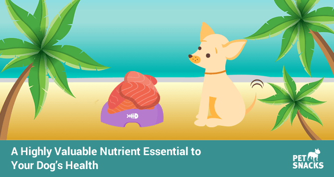 preview-full-a-highly-valuable-nutrient-essential-to-your-dogs-health