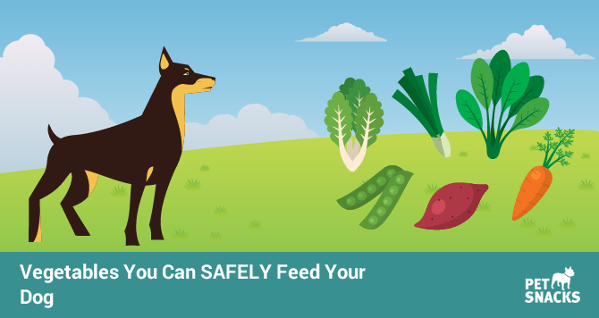 preview-full-vegetables-you-can-safely-feed-your-dog-1