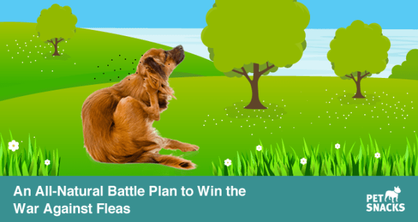 preview-full-An All-Natural Battle Plan to Win the War Against Fleas.fw
