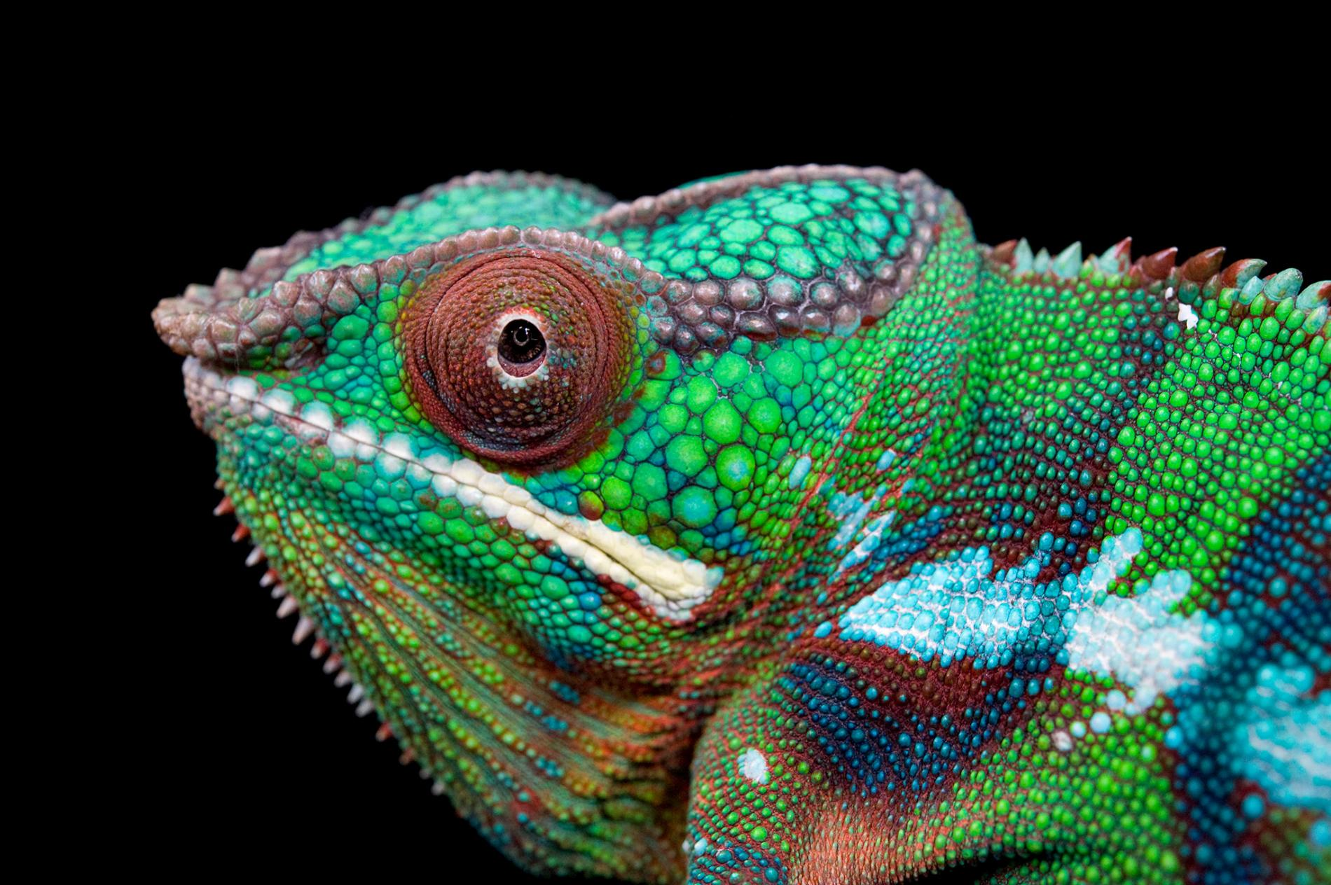 Top Characteristics Of Reptiles That Were Here In Our