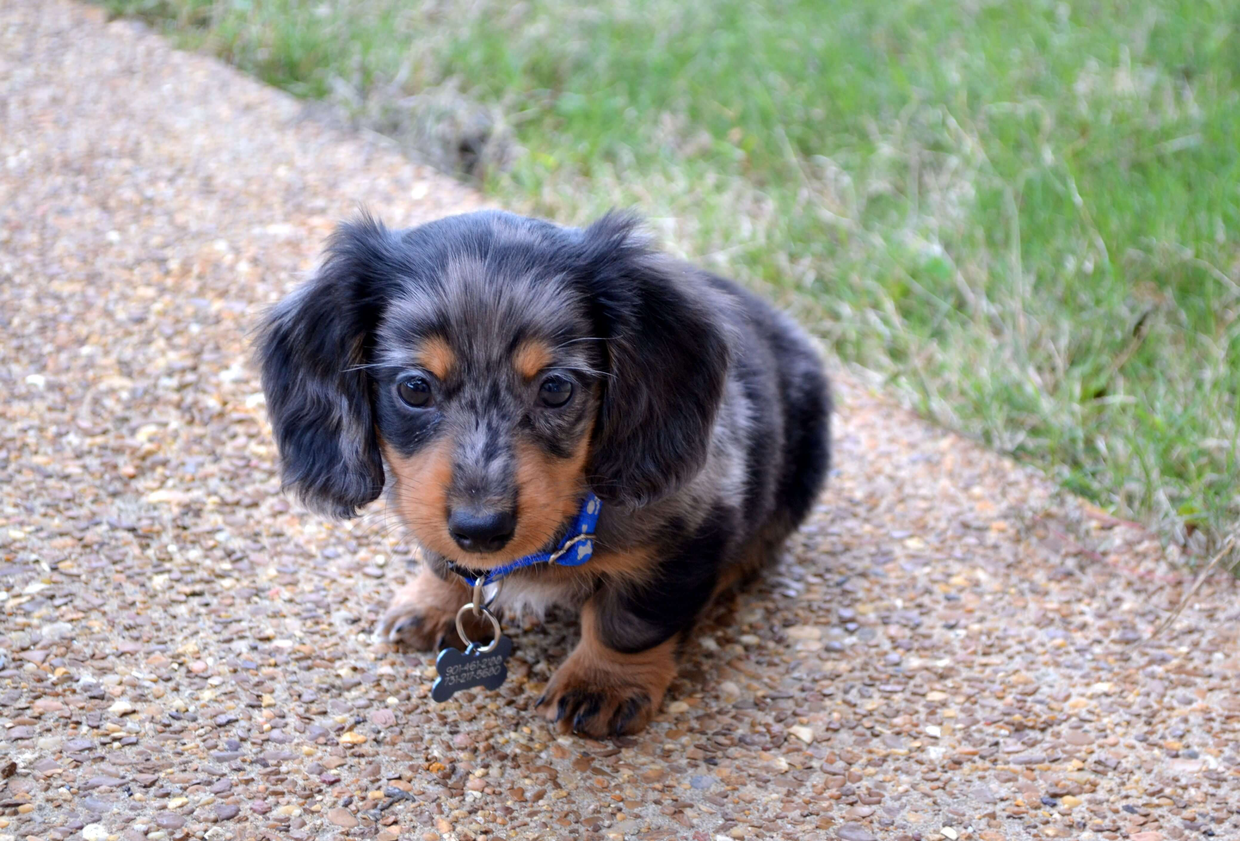Most Popular Best Small House Dogs Breed Pets Nurturing