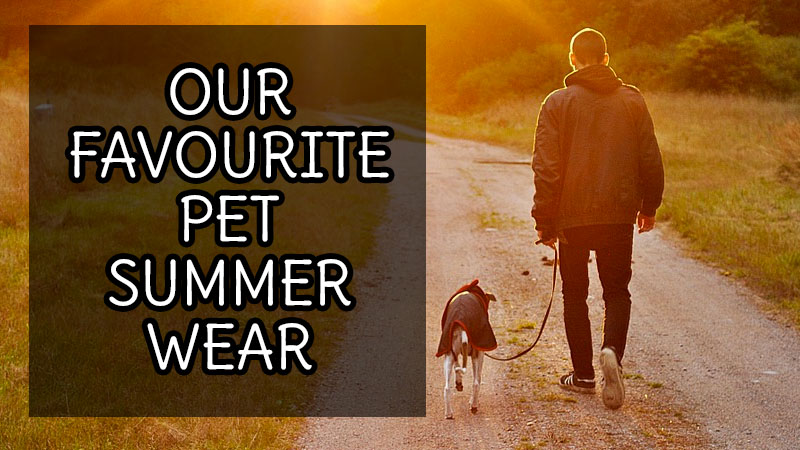 Man it's getting hot out there! Why not check out these hot summer wear for pets!