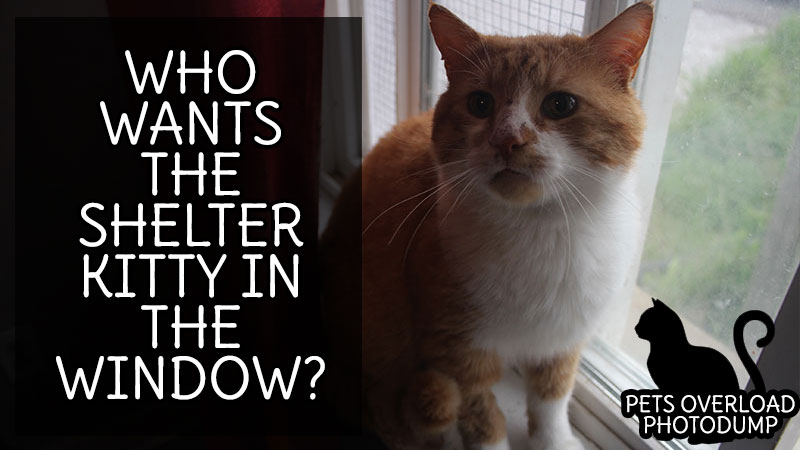 Who Wants the Shelter Kitty in the Window?