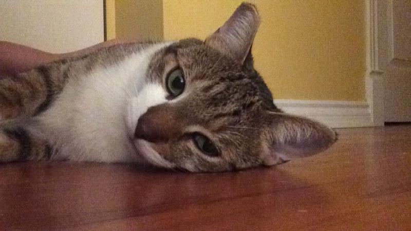 beau-lying-floor-rolling-cute-adorable-greeting