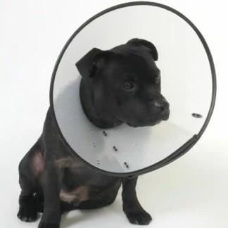 smart collar cone