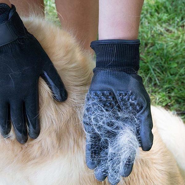 gant poils chien