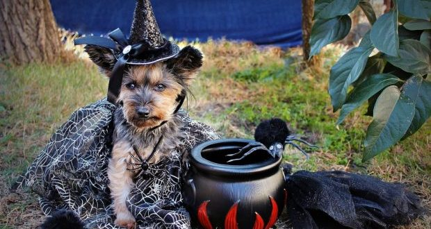 costume for your pet