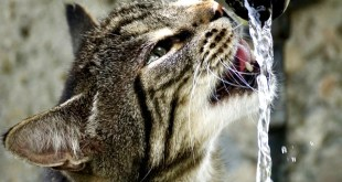 cats prefer to drink water