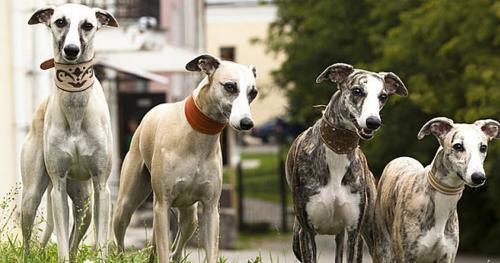 Итальянские клички для собак и кошек, красивые имена для ...