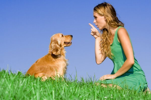 Understanding Psychology of Dog Training