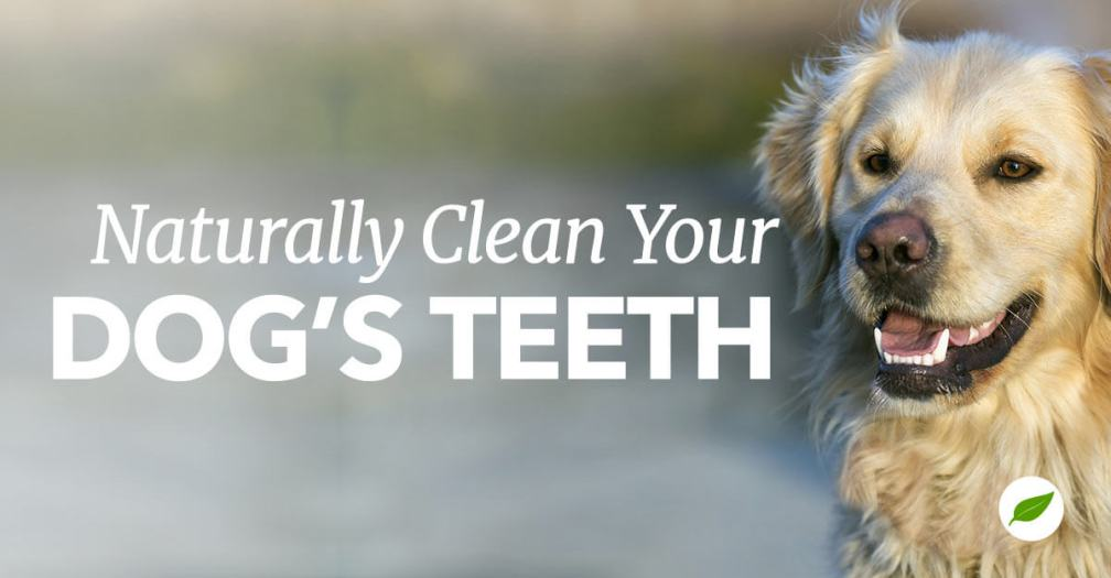 6 Tips to Keep Your Dog's Teeth Clean