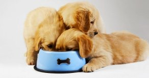 Which Foods Can Your Dog Eat ?