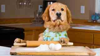 Home Made Food Recipes for Golden Retrievers