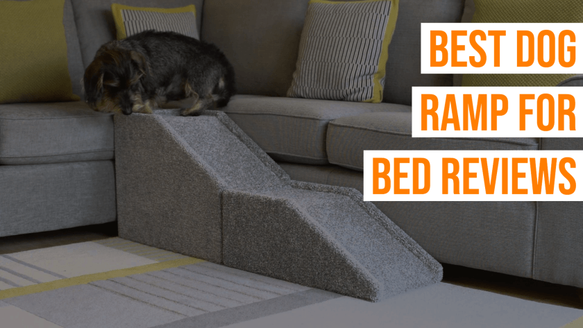 Best Dog Ramp For Bed Reviews