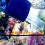 Algae-Mower-Vac-0-0