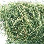 Oxbow-Animal-Health-Western-Timothy-Hay-for-Pets-25-Pound-0