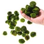 20pcs-Giant-Marimo-Moss-Balls-0612-Cladophora-aegagrophila-Live-Plant-Freshwater-Aquarium-0
