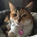 Cute-Cat-Pet-ID-Tag-Indoor-Only-Cat-If-Im-Out-Im-Lost-Personalize-Col-0-1