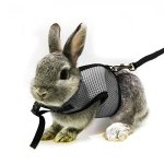 ASOCEA-Adjustable-Soft-Harness-with-Stretchy-Leash-for-Bunny-Cat-0
