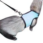 Alfie-Pet-by-Petoga-Couture-Jaylin-Harness-and-Leash-Set-for-Small-Animals-Like-Guinea-Pigs-and-Rabbits-0