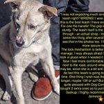 Dog-Company-Retractable-Dog-Leash-1-Premium-Dog-Leash-Superior-Engineering-Walking-or-Training-DogsCats-0-1
