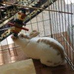 Medium-Crazy-Color-Rabbit-Chew-Toy-0-2