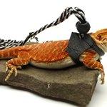 Ogle-Lizard-Leash-Limited-Edition-Black-Web-0-0