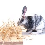 Sisal-Carpet-Chewing-and-Digging-Station-Rabbit-Accessories-0-2