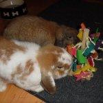 The-Tree-Pet-Rabbit-Toy-0-2