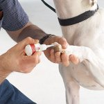 Top-Performance-MediStyp-Liquid-Super-Sealer-Liquid-Bandage-for-Treating-Minor-Nicks-and-Cuts-on-Dogs-and-Cats-0-1