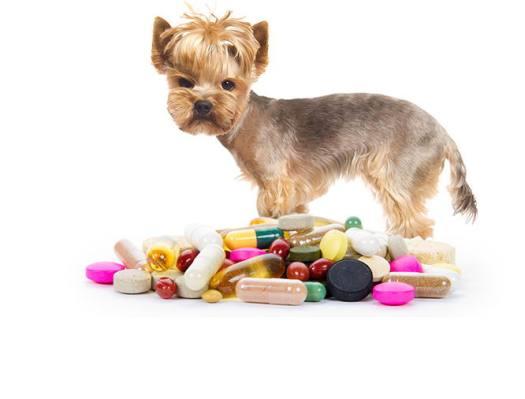 Flea Pills For Dogs