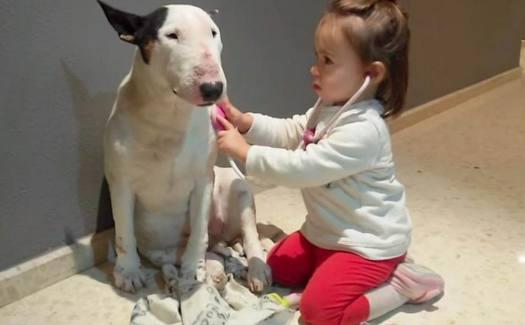Heart Murmur In Dogs