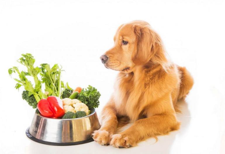 Nature's Choice Dog Food