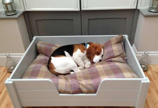 Dog Bed Attached To Your Bed