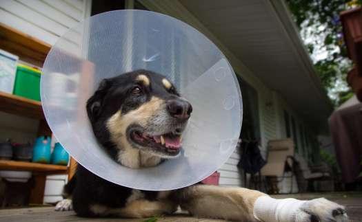 Dog Cone Collar Petsmart