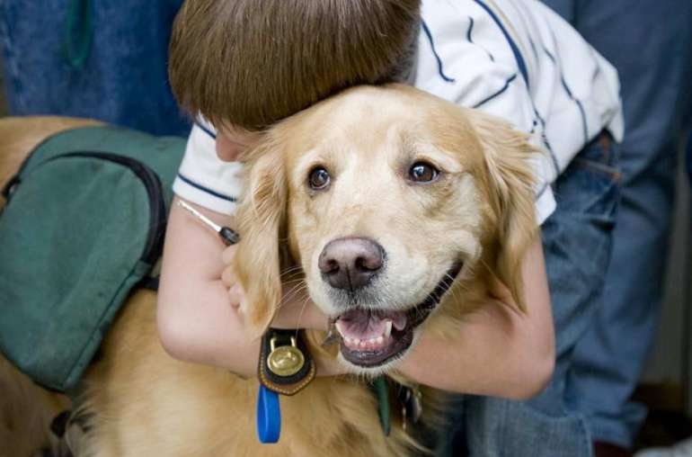How To Make Your Dog A Therapy Dog