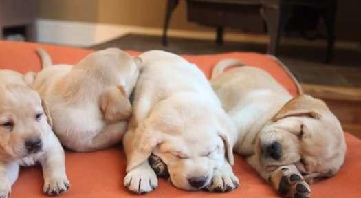 Ll Bean Dog Beds