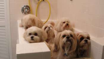 Self service dog wash near me petswithlove where to find self dog wash near me solutioingenieria Gallery
