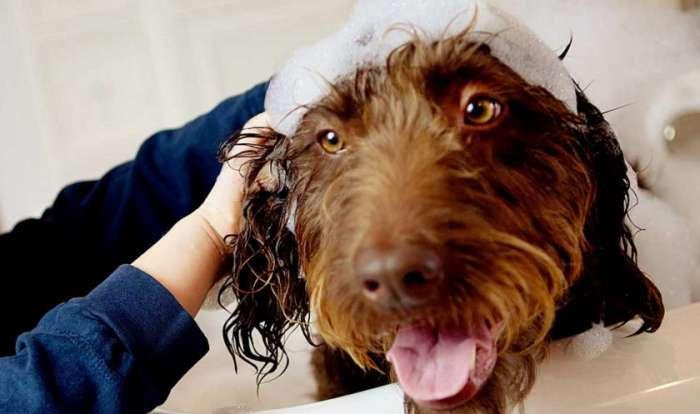 Self service dog wash near me petswithlove self service dog wash near me solutioingenieria Gallery