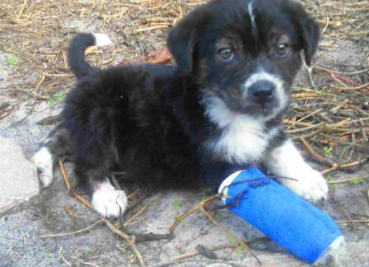 Dog Pain Medicine