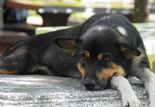 Dog Uti Treatment