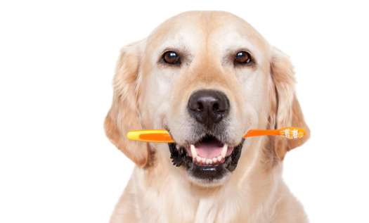 Healthy Mouth Dog