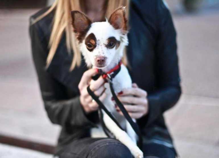 Az Small Dog Rescue